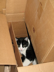 Oliver in Nested Boxes (Mr.TinDC) Tags: cats pets animals oliver tuxedocats cardboard kitties felines boxes moggy blackandwhitecats blackwhitecats