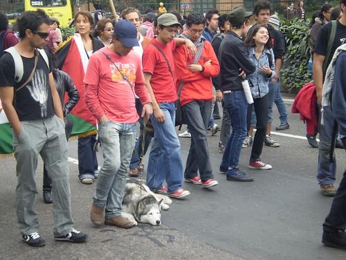 Marcha apoyo a Palestina / Gaza en Bogotá, Colombia - 20090106 - 1061716