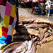 Shark finning in M'bour