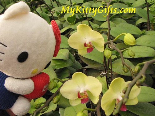 Hello Kitty Watching White Orchid with Red Heart in Hong Kong Orchid Trip