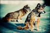 Supertrampdogs (Manlio Castagna) Tags: dogs dof bokeh hdr salerno tramp manlio castagna photomatix tonemapped tonemap manliok