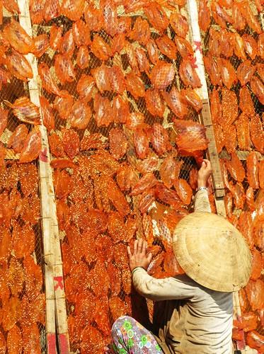 Fish drying on the Nha Trang beach, Vietnam