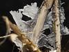 Ice cristals (MichielDeG) Tags: winter nature icecristal