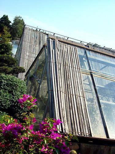 Treibhaus des Gartencenter Hoffmann in Unterengstringen