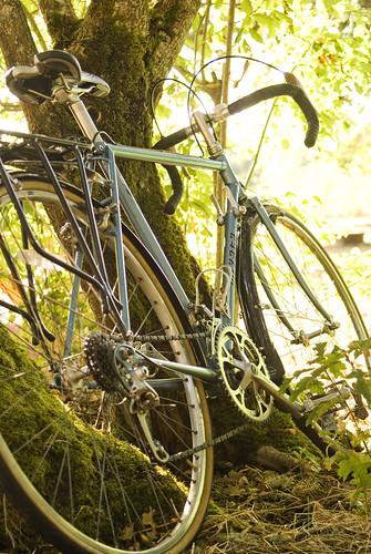 Bike glowing in green tree