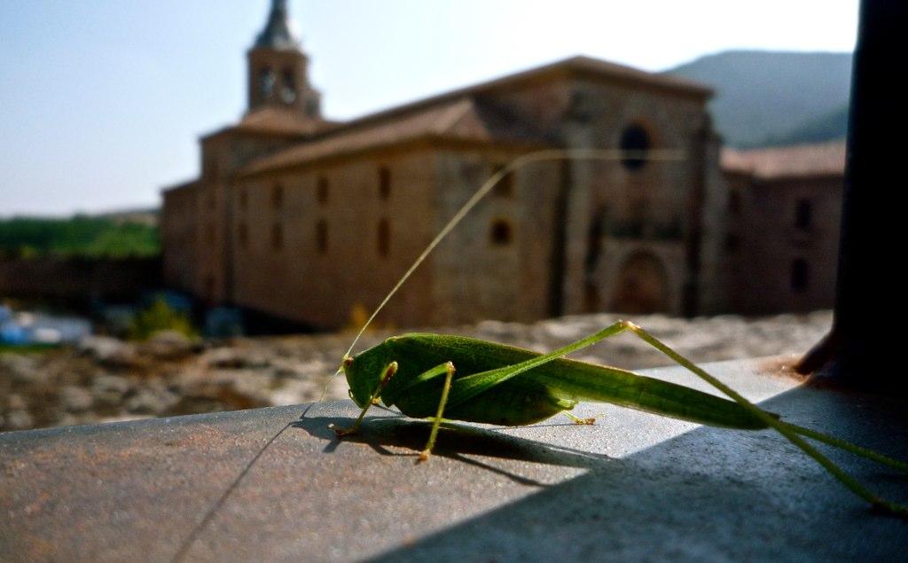 Saltamontes y Monasterio de Yuso