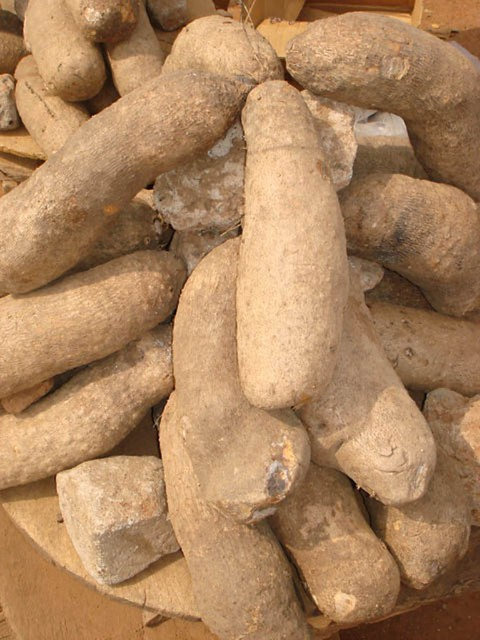Yam tubers for sale in the market