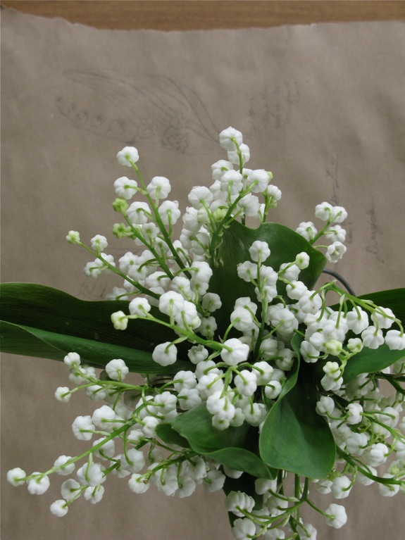 lily of the valley botanical diagram 010