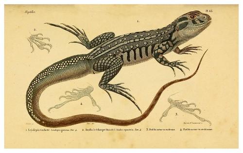 009-Erpétologie générale ou Histoire naturelle complète des reptiles 1834