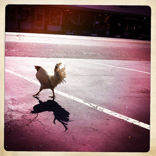 Road Crossing Chicken