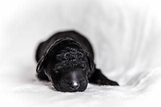 precious baby girl