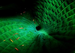 Black Hole-Green Hole (mightyquinninwky) Tags: light shadow green texture leaves leaf hole kentucky lexingtonkentucky textures elephantear orton artisticexpression fontaineroad centralkentucky thebluegrassstate