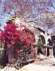 California climbing flowers (Sarah Ross photography) Tags: california trip april2005 pink flower ivy climb wall arch bench mission church missionsanjuancapistrano sarahr89 sarahrossphotography flowers petals nature wideangle landscape wideopenspaces outdoors outside flora window windowpane glass frame windows petal landscapes land vista view plants