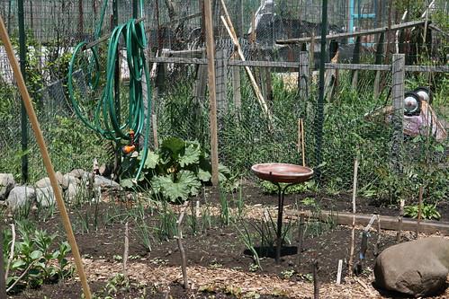 Skippy S Vegetable Garden May 2008