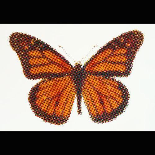 cmyk monarch 12 x 16