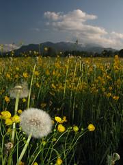 Bayern Alpen Blumenwiese Germany (hn.) Tags: flowers copyright plants mountain plant mountains alps flower nature berg field germany season bayern deutschland bavaria spring w