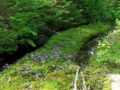 Skidder Tracks (Binks) Tags: forest woods maine tracks pools howland skidder