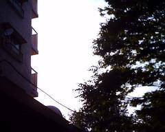 【写真】VQ1005で撮影した逆光