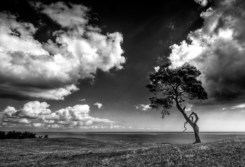 Tree II mono crop | HDR (u n c o m m o n) sky bw sun water clouds rural canon landscape 350d skne raw tripod canon350d toned frontpage hdr orton lucisart lucis uncommon labmode photomatix sigma1020 canon350 tonemapped 3exp landscapeset lusic marcusclaesson selall selnature