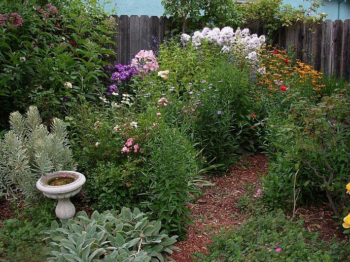 garden shots aug 08 005