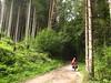 bosco sulla route n.5