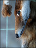 fox, not alive (sulamith.sallmann) Tags: berlin animal dead deutschland death kunsthaus fox 2008 tot tod tacheles tier fuchs berlinmitte kreativ gestorben sulamithsallmann pa0 fu0 kunstort