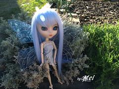 Nadia Fairy_Pullip Custom (Nerea_Mei4life) Tags: fairy pullip mei custom hada naida mei4life