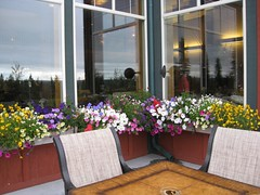 Flower Boxes (steinba) Tags: alaska copperriver