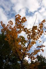 Autumn tree (Ingwii) Tags: familie asker semsvann jentene