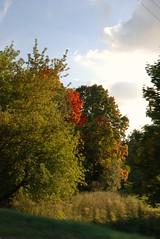 DSC_0172 (RutaSL) Tags: nature lithuania lietuva gamta
