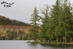 IMG_8797 (sabrina_gross78) Tags: trees mountain lake canada tree fall nature automne outside outdoors landscapes quebec lac superior arbres arbre moutains monttremblant lacsuperior worldwidelandscapes natureselegantshots