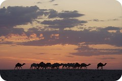 The camels and the desert (SWAIDAN  to Syria  G.W.L.K_) Tags: sky clouds canon desert kuwait camels soe theperfectphotographer swaidan