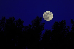 Moon at Perigee (A.alFoudry) Tags: blue trees sunset sky moon tree night canon eos high deep full fullmoon frame 5d kuwait usm fullframe ef kuwaiti q8 abdullah 400mm   canoneos5d  perigee  kuw q80 f56l  xnuzha alfoudry canonef400mmf56lusm  abdullahalfoudry  foudryphotocom moonatperigee