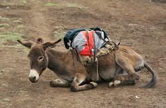 Meket escarpment trek 012 (MikeManning) Tags: travel ethiopia 2008 rtw wollo tesfa meket