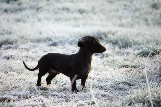 Snow dog?