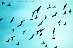 Birds and sky, both free (imranthetrekker , new year new adventures) Tags: life pakistan sky pets streets tourism nature birds markets culture parrot adventure peshawar nwfp oldcity inns caravans pathans khyberpass torkham imranthetrekker imranschah aplusphoto tribalareas chitralguy