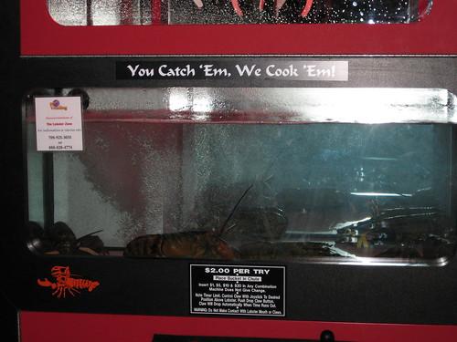 Lobster Zone máquina de langostas vivas