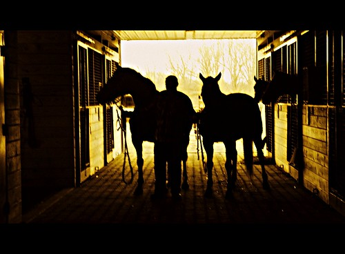 man & mares in the afternoon...