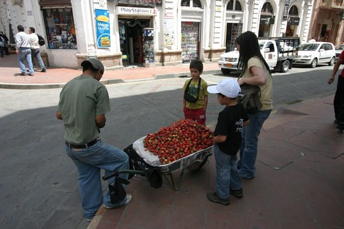 Strawberry vendor in Cuenca...