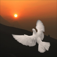 Its a new day (NaPix -- (Time out)) Tags: nature sunrise landscape dawn peace action dove wildlife flight vietnam explore sapa paix borntobefree explored napix
