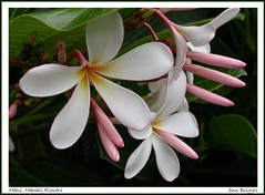 Maui, Hawaii Flowers (Don Briggs) Tags: flowers macro hawaii maui mauihawaii donbriggs