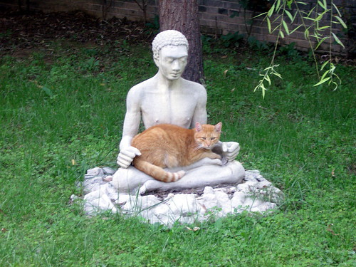 Cat & Buddha (Caochangdi, Beijing)