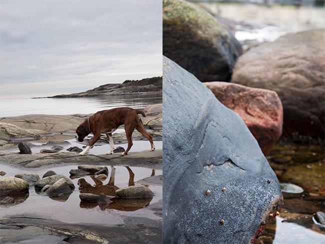 promenerar bland stenar