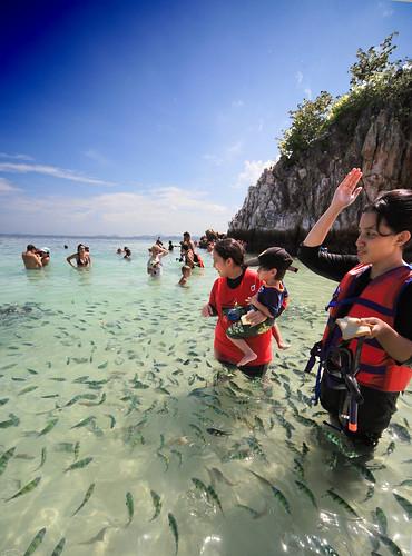 Phuket | Feeding fish @ Khai Nui Island