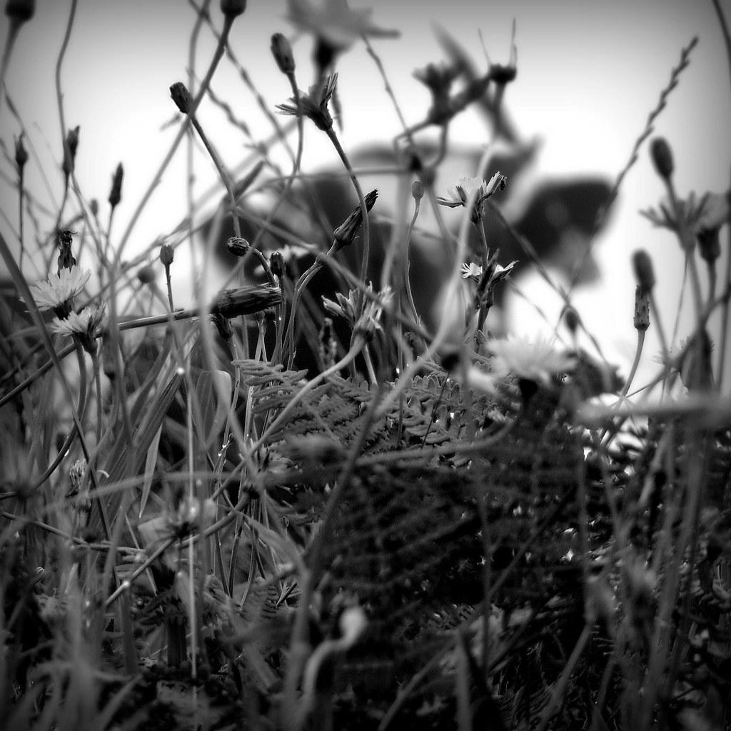 pasture #P1200713