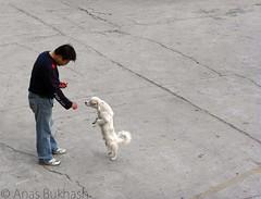 here doggie... (Anas Bukhash (nascity)) Tags: dog puppy fun funny shanghai eat feed fed chin