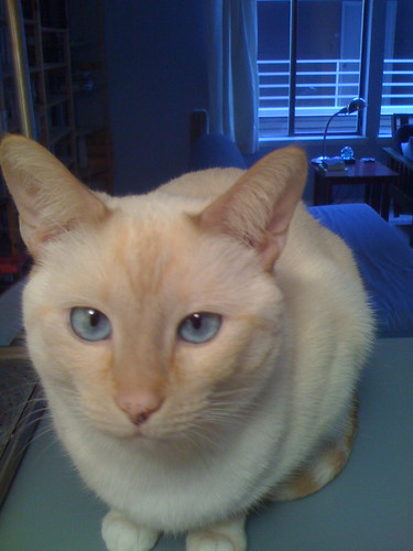 cat counter blues