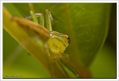 IMG_3481 (yimING_) Tags: macro nature spider singapore 21 spiderweb 11 ladybird jumpingspider lynxspider canonmpe65