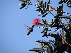 Flores Etéreas para una Mariposa de humo: marzo 2008