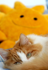 Sunny disposition (VMOS) Tags: eye yellow cat ginger sunny peek marmalade snoozy bestofcats
